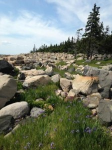 Maine Yoga Adventures Presents: Hiking and Paddleboarding Adventure